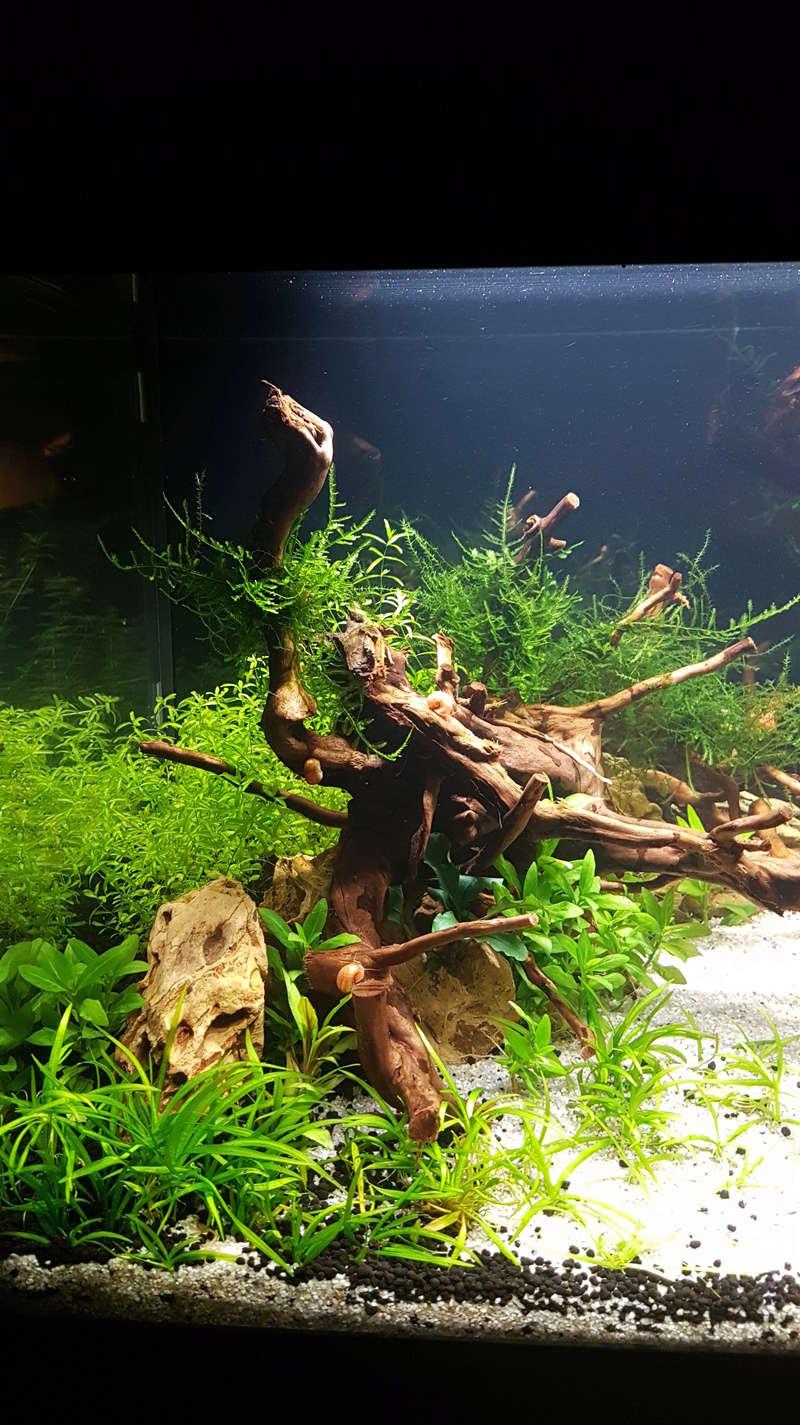 Aquascaping dans un aquadream 60L 20180413