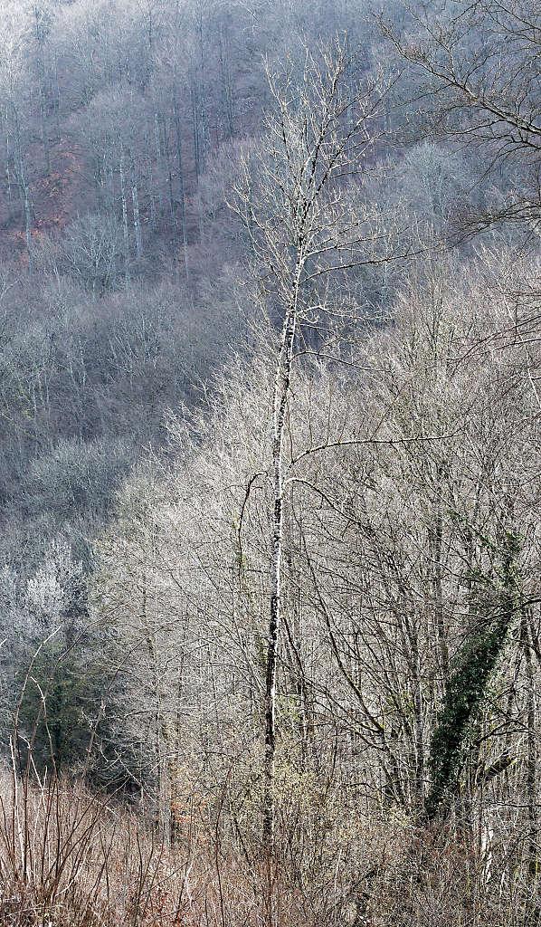 Un arbre P3140110