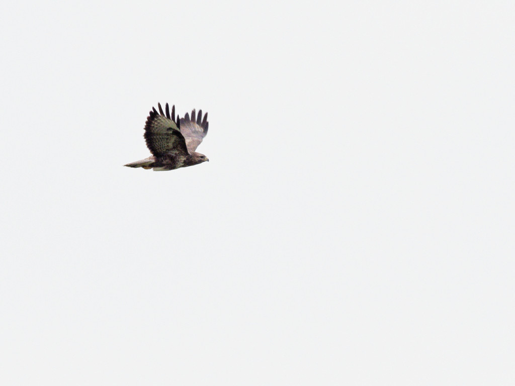 Oiseau Pa250710