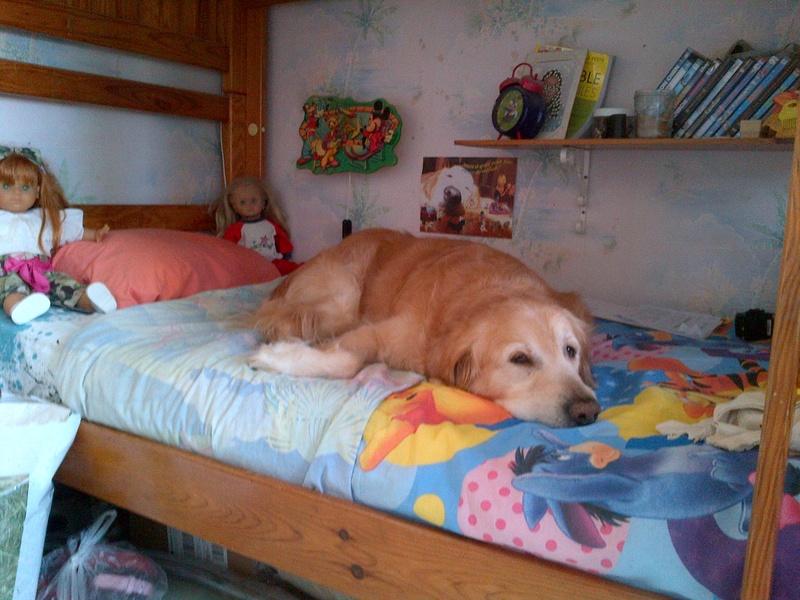 Ensemble vous pouvez tous m'aider à soigner ma chienne. :-) Img-2032