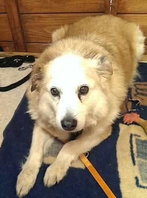 Cindy in NRW: Wenn alte Hunde im Tierheim sterben!  86c43510