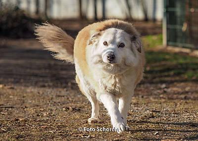 Cindy in NRW: Wenn alte Hunde im Tierheim sterben!  Edc4d210