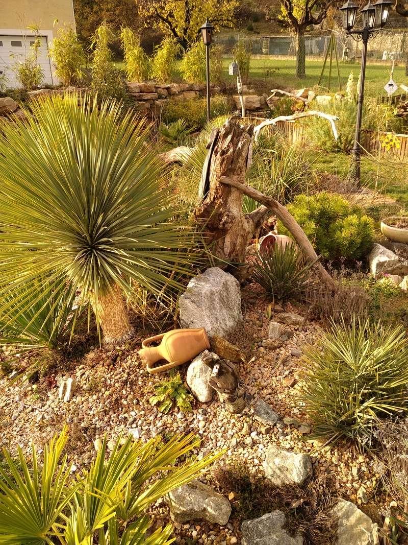 Yucca rostrata Img_2017