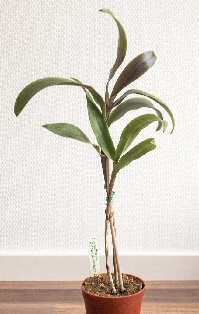Sägemehl als Orchideensubstrat??? 975fa210