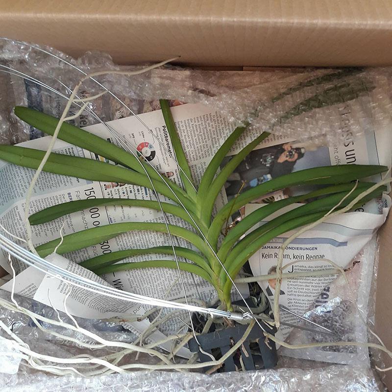 Orchideen-Neuzugang - Seite 38 24474810