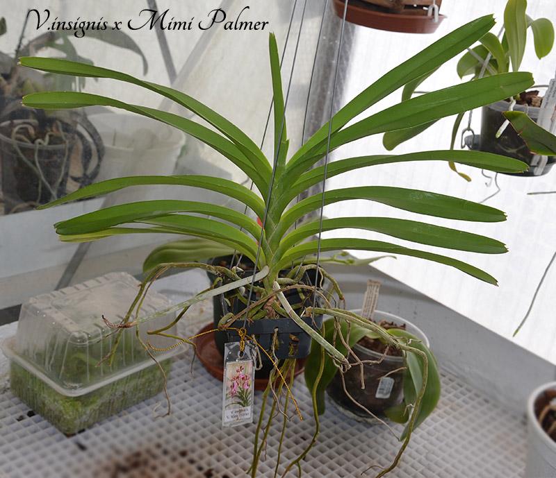 Orchideen-Neuzugang - Seite 38 Dsc_0125