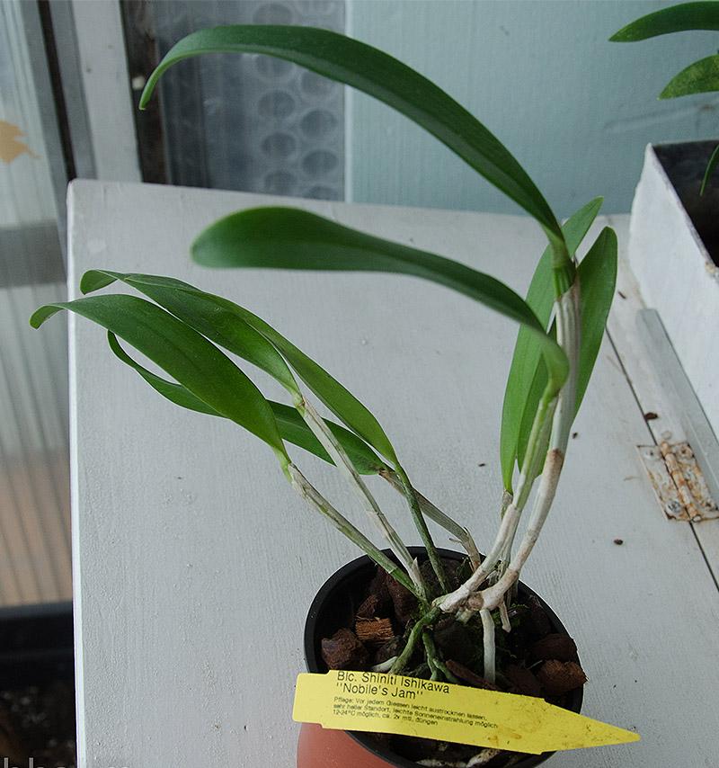 Orchideen-Neuzugang 2 Dsc_0399