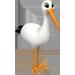 Jabiru d'Asie / Cigogne => Plume de Cigogne Stork10