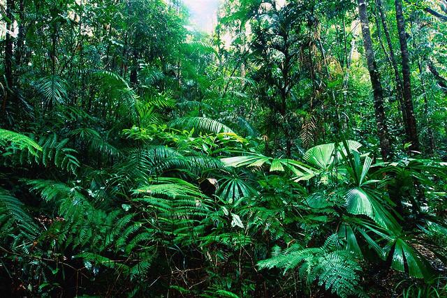 Missing Files Prequel 02 Rain Forest 9e1fb310