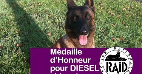 Hommage à DIESEL Diesel10
