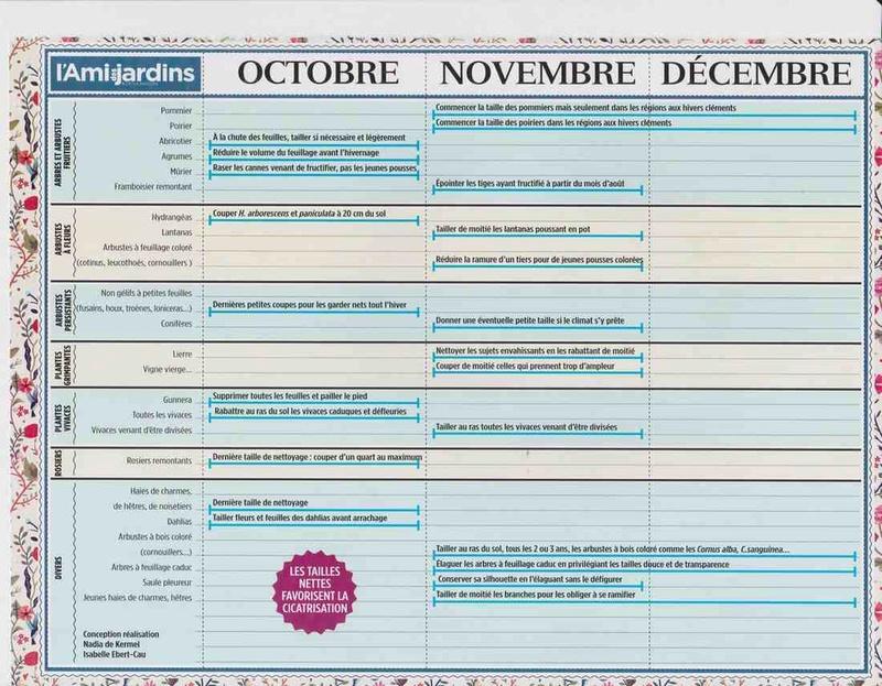 le calendrier des tailles C10