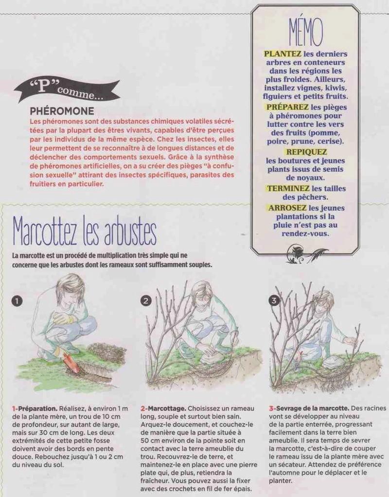 marcottez les arbustes Er10