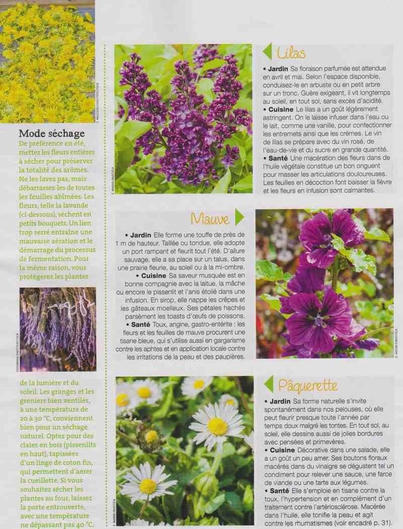 les fleurs remèdes... Hh11