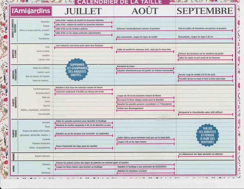 le calendrier des tailles X10