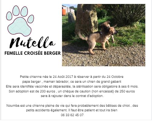 NUTELLA, chiot femelle croisé berger, 2 mois 22310210