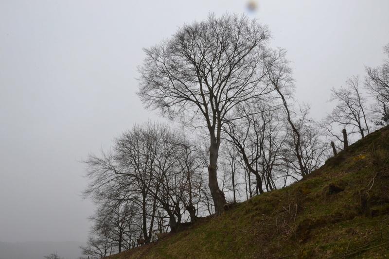 Une cabane dans l'arbre - Page 2 Dsc_0412