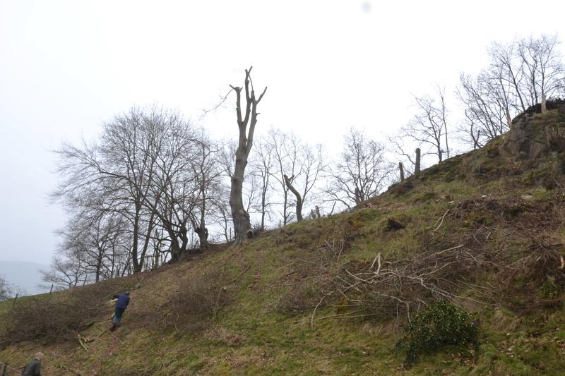 Une cabane dans l'arbre - Page 2 Dsc_0511