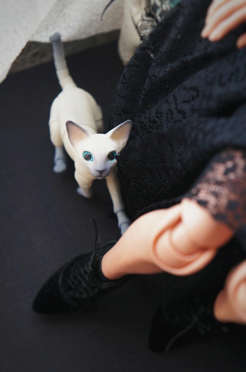 [Narae 412] Happy international cat day! - P.13 - Page 11 Dsc07810