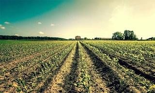 شركة مجموعة مزارع الفلاحية BEST HARVEST : توظيف 06 تقنيين فلاحين و 04 محاسبين بشتوكة ايت بها Best_h10