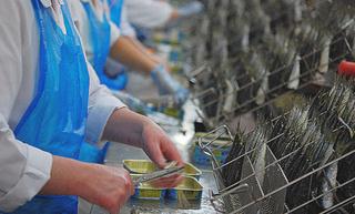شركة DAMSA : توظيف 200 منصب عمال تعليب الاسماك Opératrice En Conserverie Du Poisson بمدينة العيون D_dams10