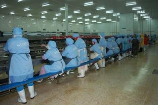 شركة Oceamic laayoune 2 : توظيف 200 منصب عاملة تصبير منتجات الاسماك بدون دبلوم بمدينة العيون  Oceami10