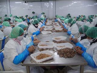 شركة بوجدة : توظيف 40 منصب عمال Décorticage Des Crevettes بدون شهادة او دبلوم  Ouvriy10