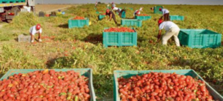 وكالة انابيك تاوريرت : توظيف 200 مستخدم فلاحي موسمي بدون مستوى دراسي للعمل بمدينة الناظور Ouvriy10