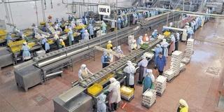مصنع SHRIMP MADELEINE لصناعات الغدائية البحرية : توظيف 35 منصب Poissonnier بدون دبلوم بمدينة الناظور  Shrimp10
