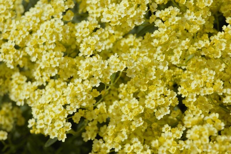 Erste Frühlingsboten im Garten und in Wald und Flur - Seite 65 Bc9a0017