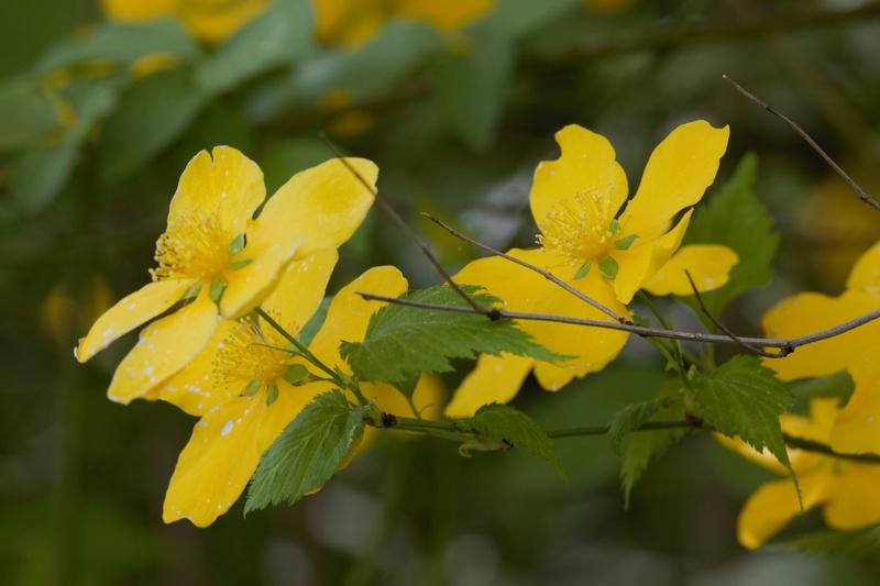 Erste Frühlingsboten im Garten und in Wald und Flur - Seite 65 Bc9a0019