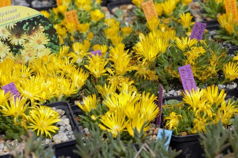 Erste Frühlingsboten im Garten und in Wald und Flur - Seite 65 Bc9a0022