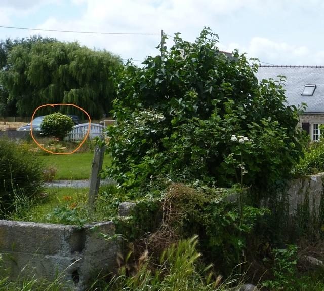 mon jardin au tregor 11111110