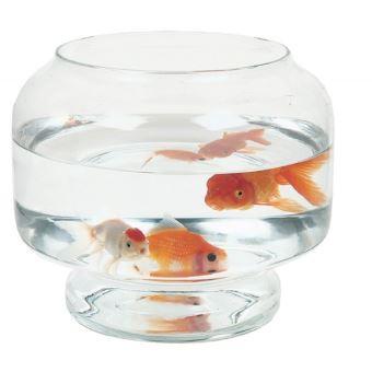 [Tutoriel] Poisson-rouge commun uniquement en bassin Aquari12