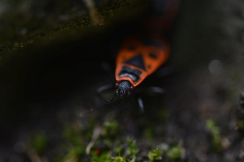 Photographe amateur ou pro, venez partager vos clichés ! Dsc_0310