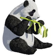 Unknown brand Panda_10