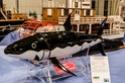 Construction du Requin de Tintin 15407610
