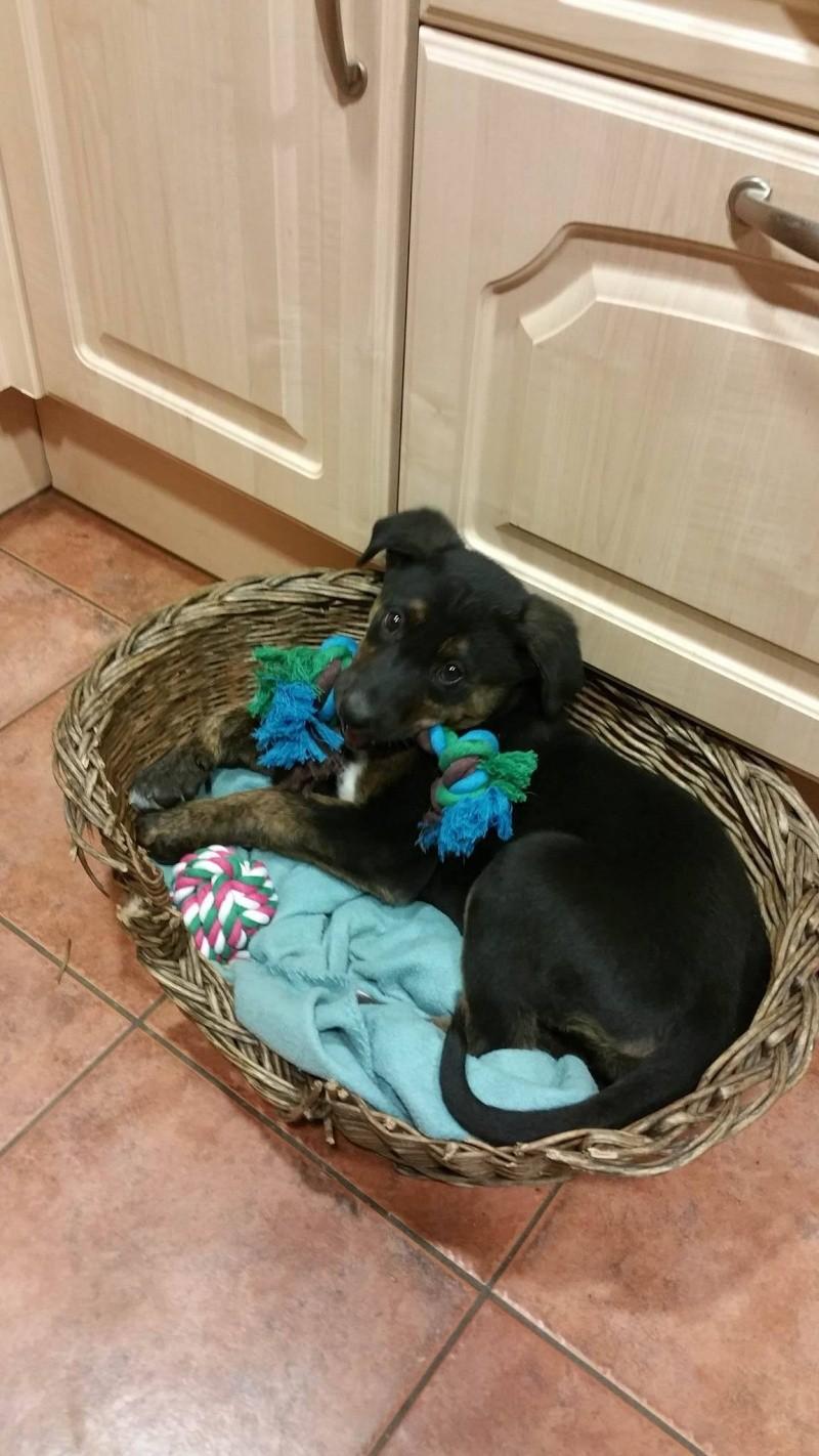 [clos]Visite post adoption (chien) à Corps-Nuds pour Laska Laska10
