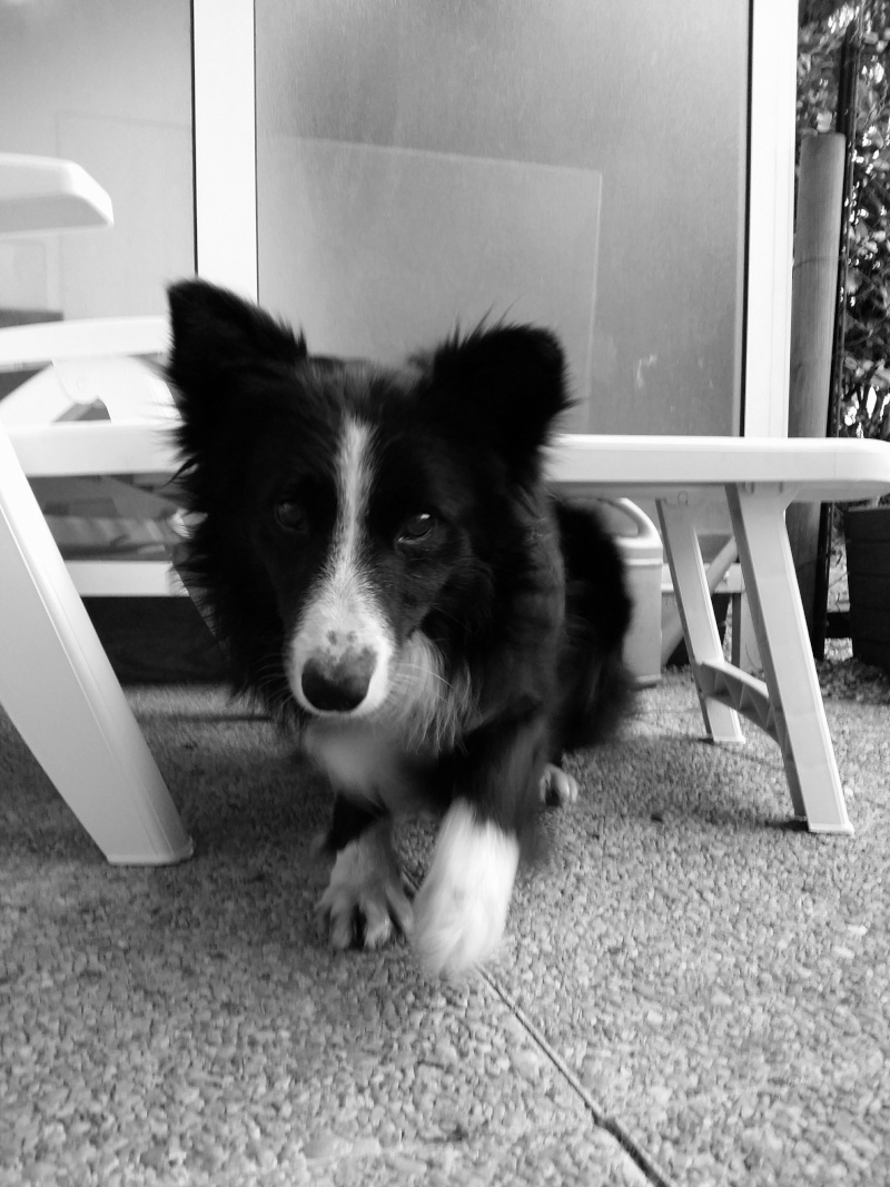 [Clos]Visite post adoption (chien) à Casson pour Pen Ar Pen_ar10