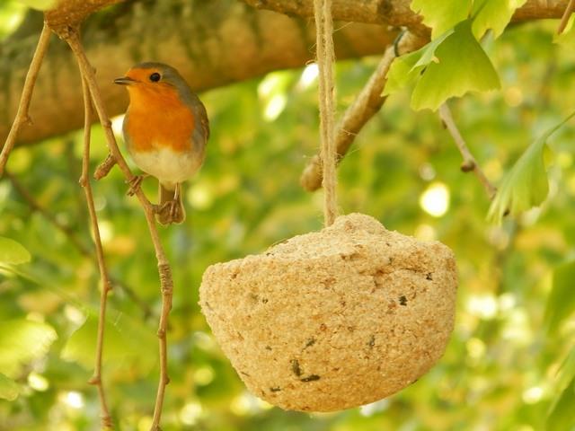 les oiseaux - Page 3 Rougeg10