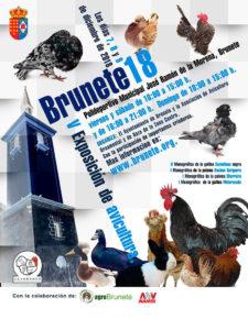 Brunete 2018 V Exposición de Avicultura  Brunet10