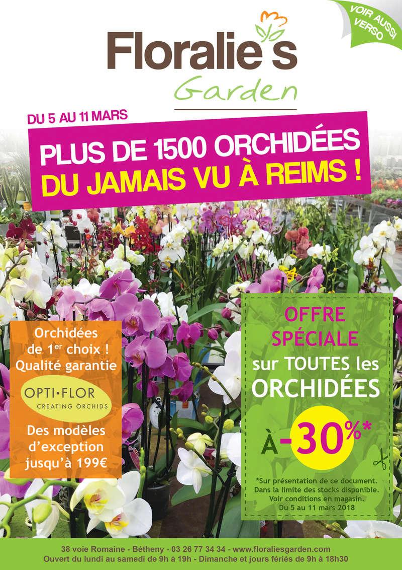 Mes phalaenopsis. Dernières acquisitions A4_mai10