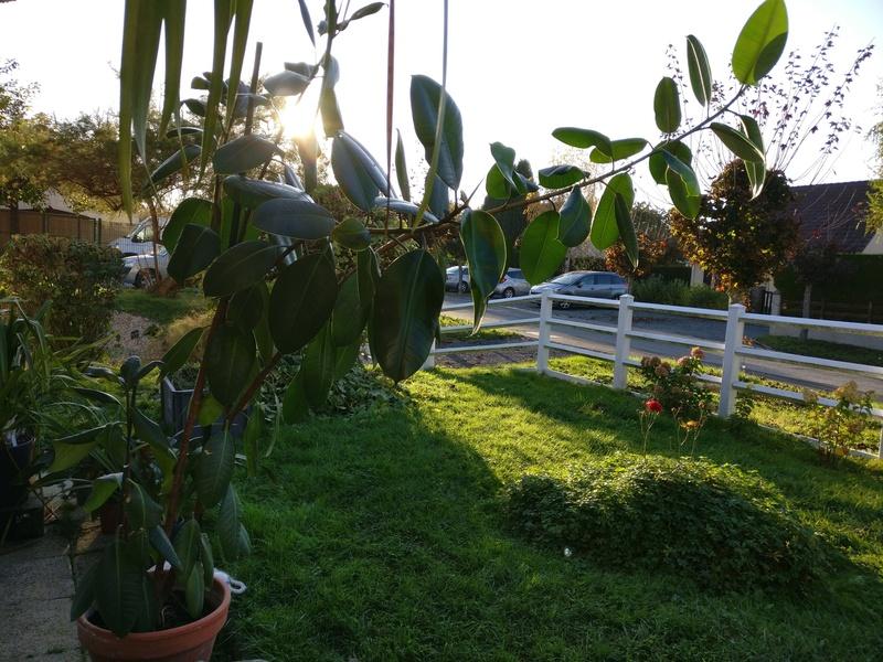 sortie des plantes vertes pour un bon depoussierage Img_2030