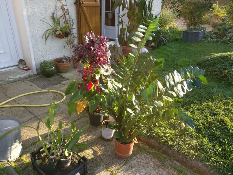 sortie des plantes vertes pour un bon depoussierage Img_2032