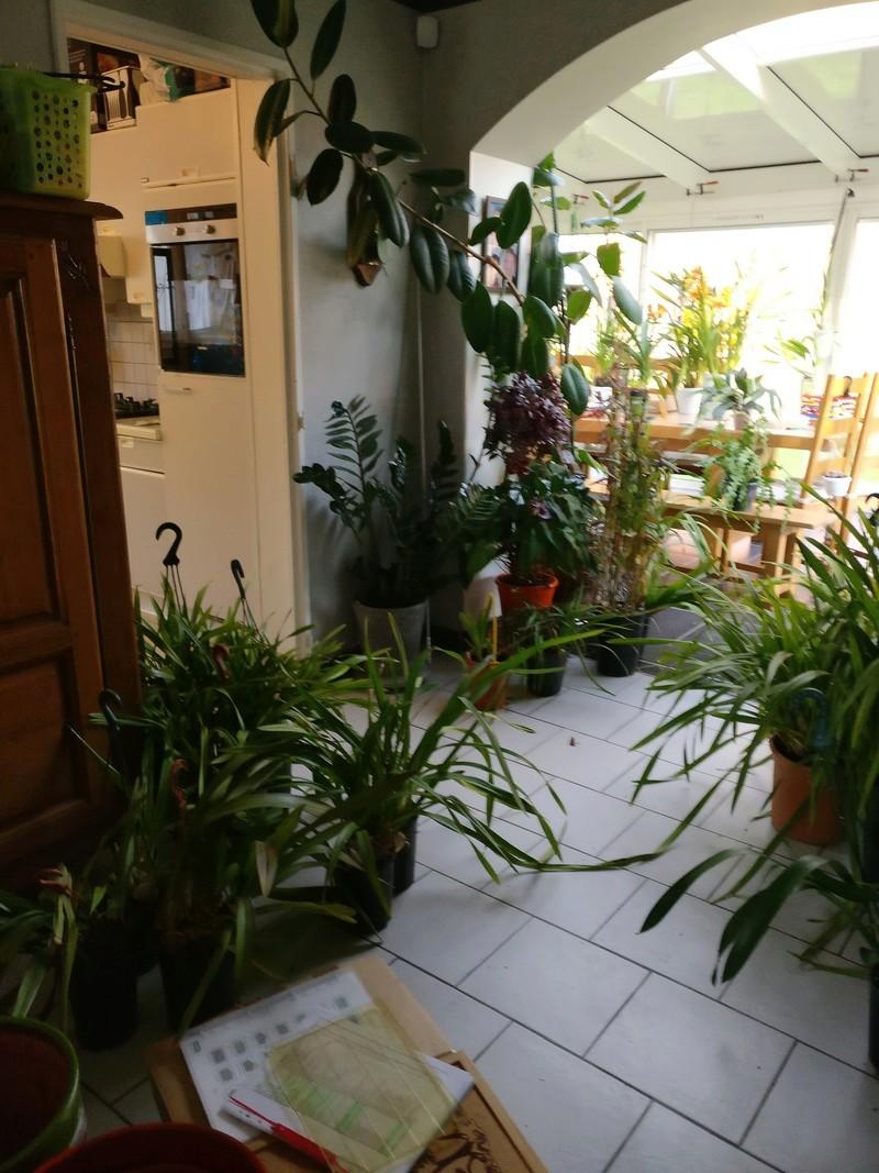 ma véranda, mon petit paradis végétal ... - Page 2 Img_2036