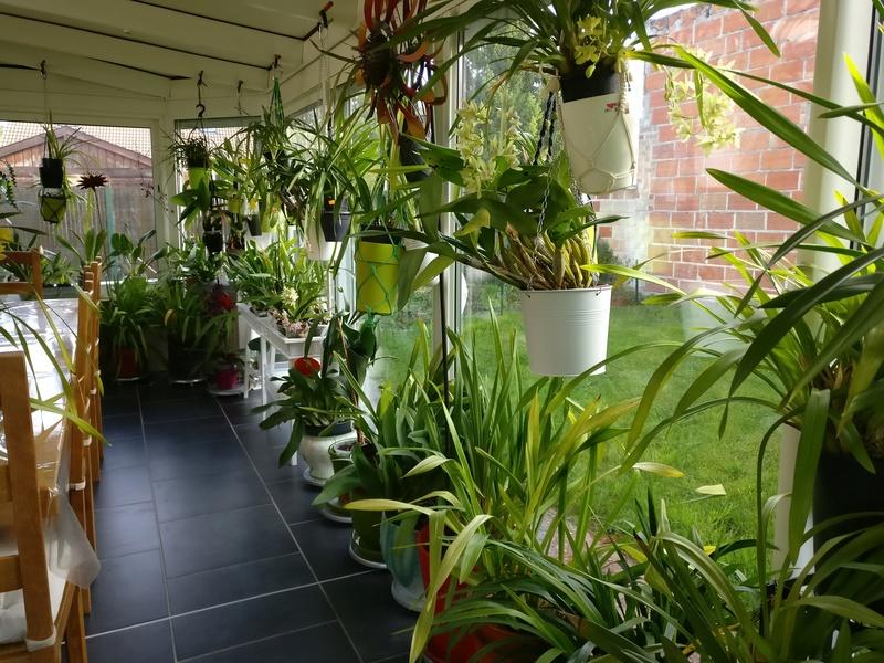 ma véranda, mon petit paradis végétal ... - Page 2 Img_2041