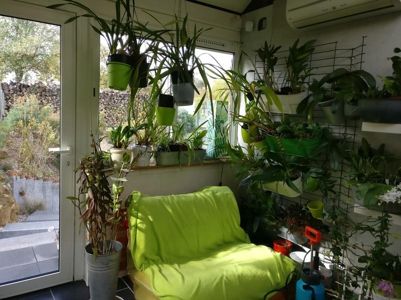 ma véranda, mon petit paradis végétal ... - Page 2 Img_2042