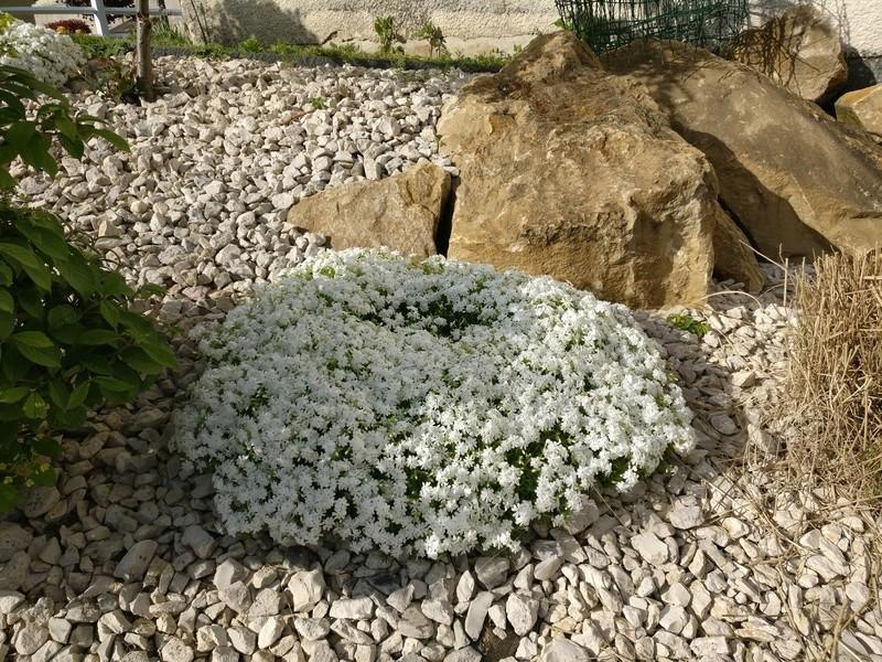 qq fleurs du jardin Img_2499