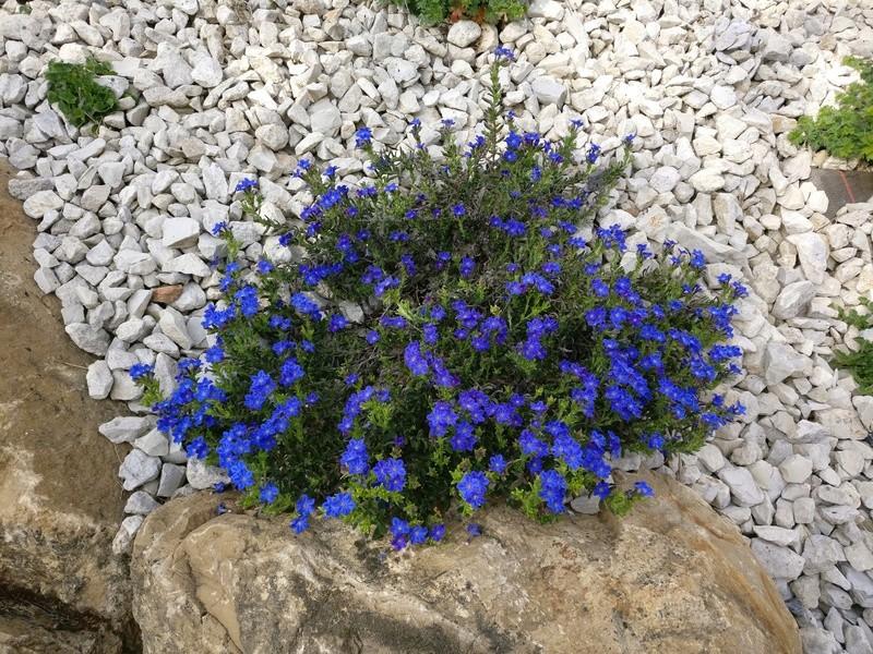 qq fleurs du jardin Img_2500