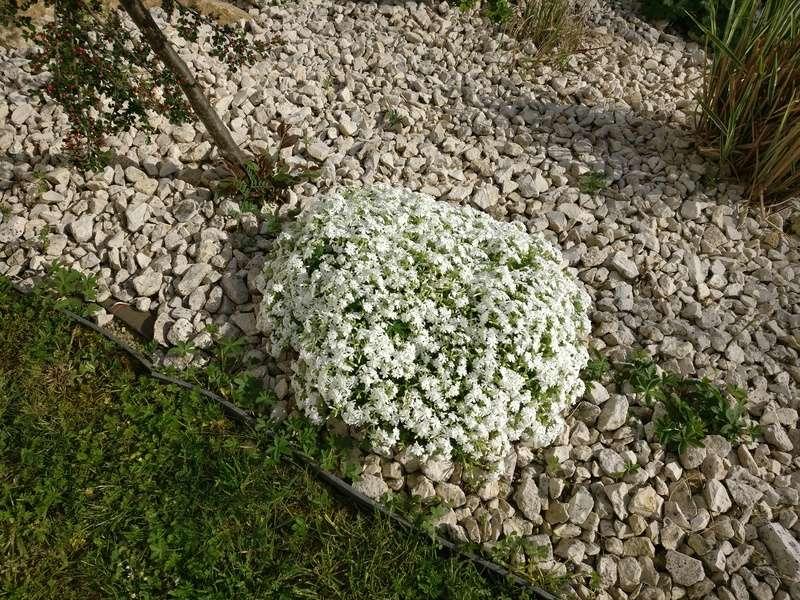 qq fleurs du jardin Img_2503