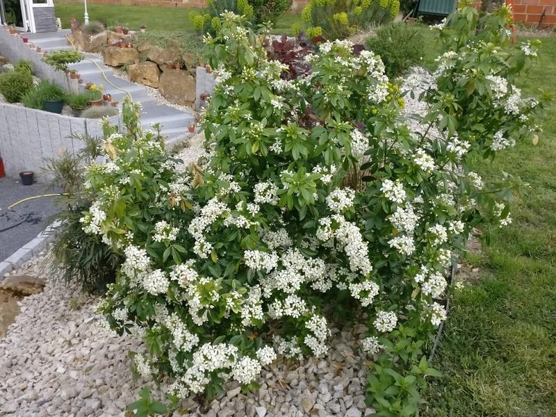 qq fleurs du jardin Img_2504